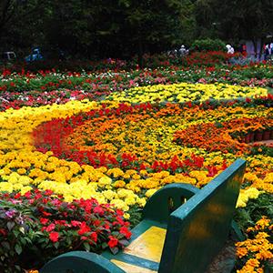Full Day Hakgala Botanical Gardens Tour Nuwara Eliya