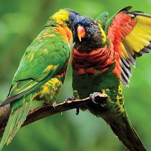 HALF DAY JURONG BIRD PARK