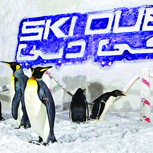 Half Day Polar Pass Ski Dubai Experience