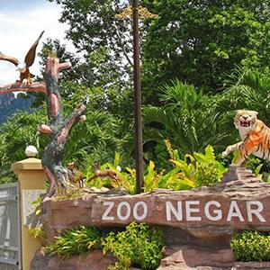 Half Day Zoo Tour