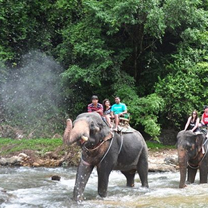 Island Eco Safari Tour with Elephant Trekking Tour