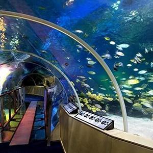 Sea Life London Aquarium - Priority Entrance